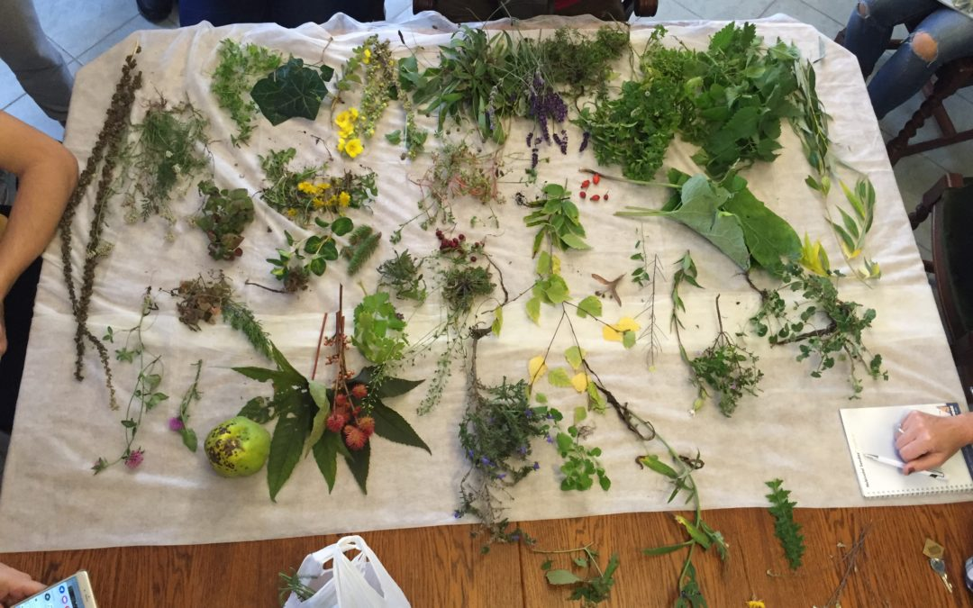 Tavasszal induló Természetgyógyász szak modulok