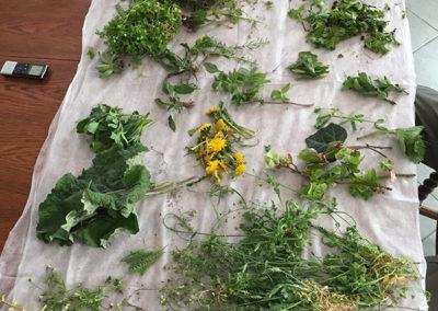Közel 40 féle gyógynövénnyel ismerkedtünk 2017 tavaszán az Atilla dombon, az életmód tábor
