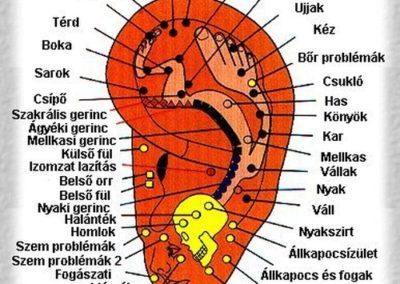 Fül reflexológia