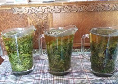 Készülőben a friss tea